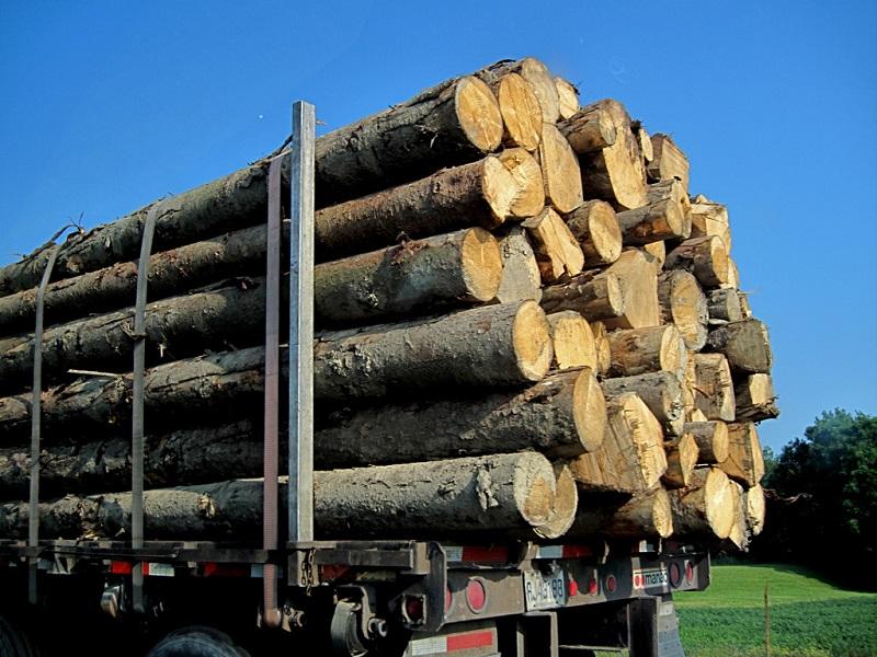 Cách tính m3 gỗ tròn chuẩn xác nhất