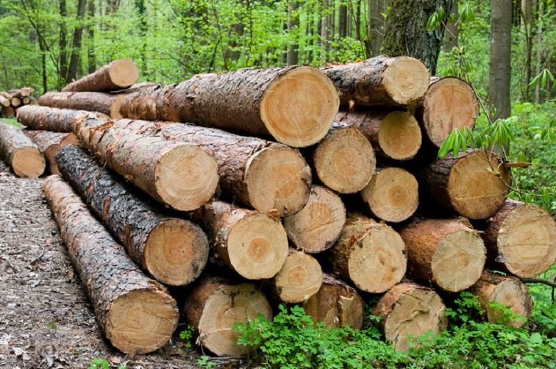 cách tính khối lượng gỗ tròn