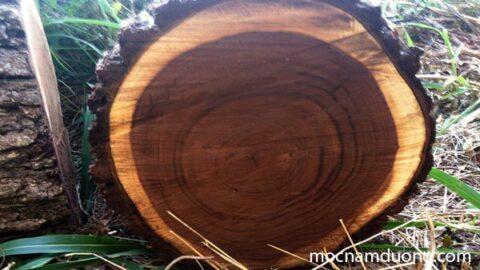 Gỗ óc chó là gì - Walnut là gì - Những thông tin cần biết về gỗ óc chó tự nhiên