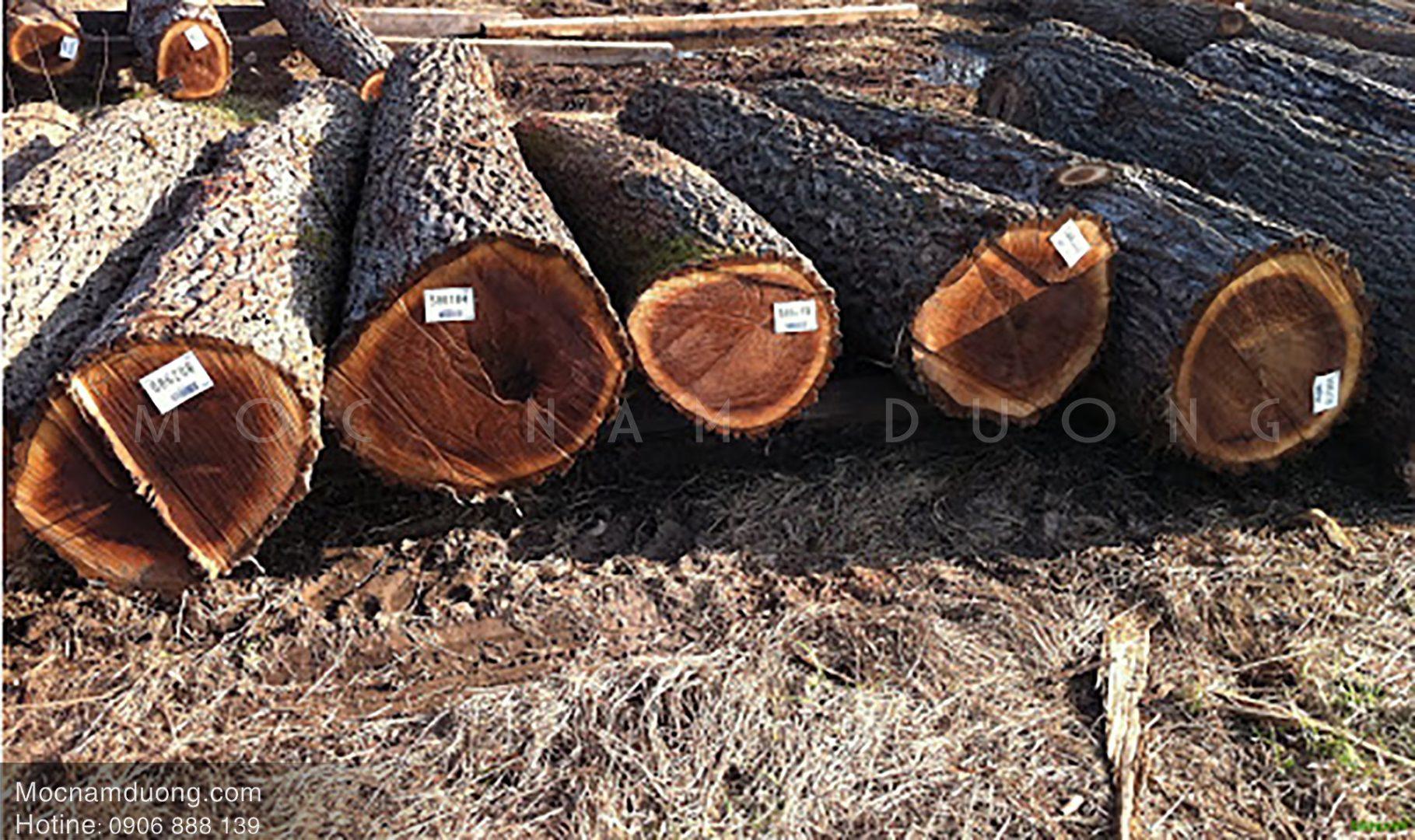 Gỗ óc chó tốt nhất là gỗ óc chó nhập khẩu từ Bắc Mỹ